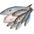 В данной категории представлена свежемороженая рыба отечественного и импортного производства.